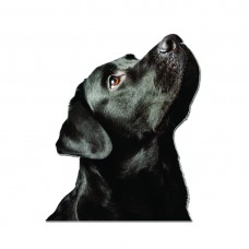 Стикер Черен Лабрадор Ретрийвър 11 cm х 9 cm